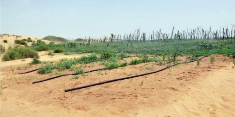 In Cina gli scienziati hanno reso coltivabili i deserti